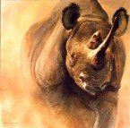 rinoceronte-134608.jpeg